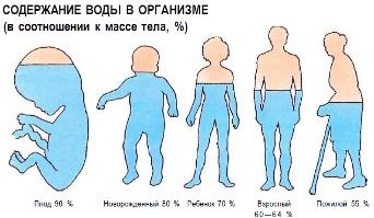 Количество воды в организме в различные периоды в жизни